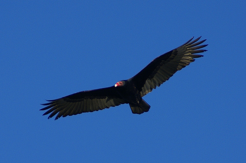 //cdn2.hubspot.net/hub/32387/file-13746593-jpg/images/consumers-are-like-vultures-to-an-inbound-marketing-agency.jpg