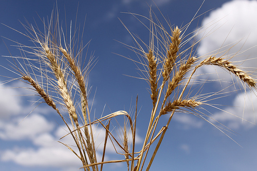 //cdn2.hubspot.net/hub/32387/file-13870535-jpg/images/separating-the-wheat-from-the-chaff-in-your-sales-funnel.jpg