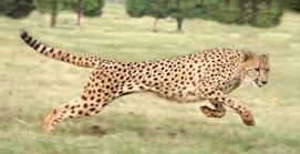//cdn2.hubspot.net/hub/32387/file-13871034-jpg/images/social-media-cheetah.jpg