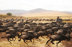social proofing is like creating stampede for your inbound marketing content