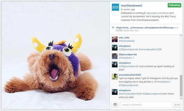 martha-stewart-puppy-instagram-resized-600