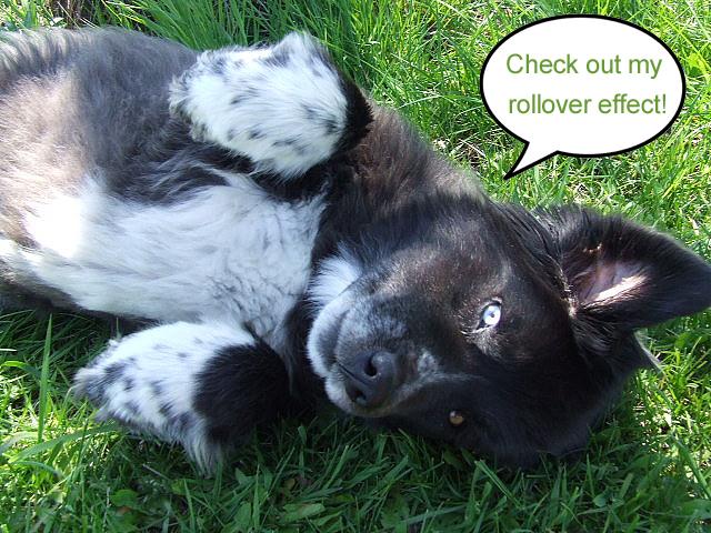 rollover puppy blogpost