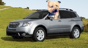 subaru dog tested marketing campaign