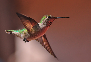 Hummingbird & Other Updates Show Google is Gearing Up