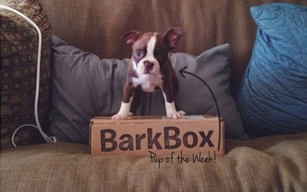 bark box facebook cover photo