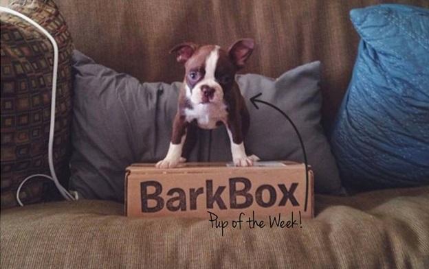 bark box facebook cover photo