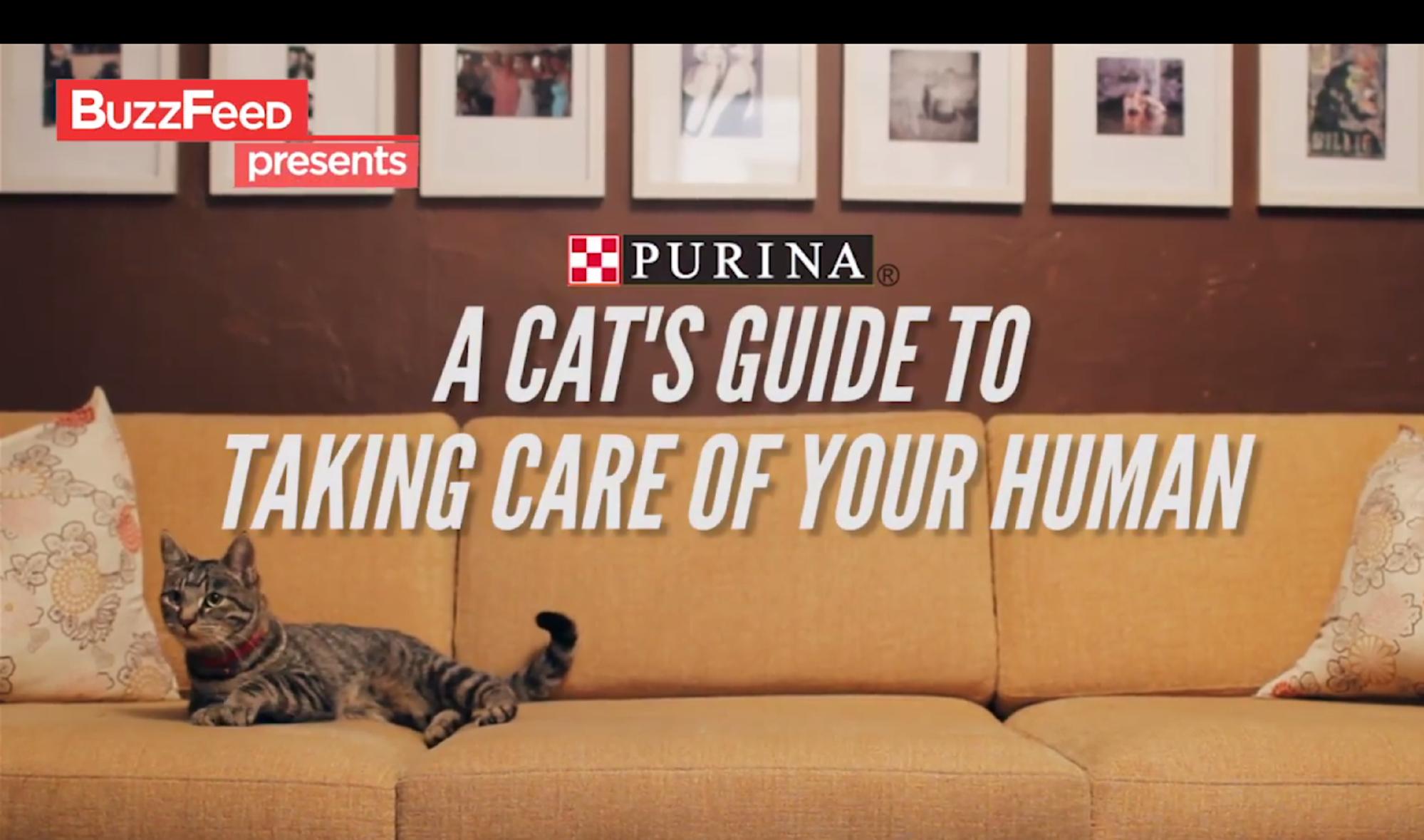 Purina Native Ad Example
