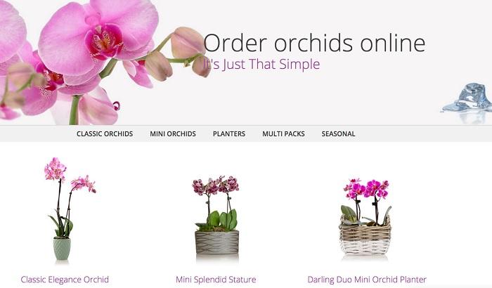 Flowershop-in-a-box-web-design.jpg