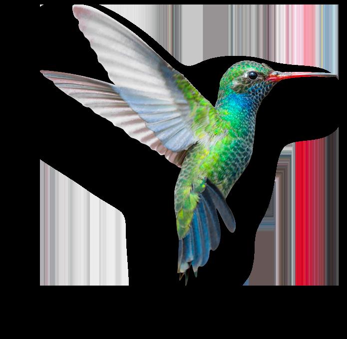 hummingbird-software