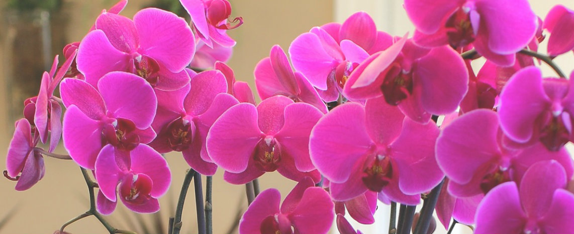 just-add-ice-orchids.jpg