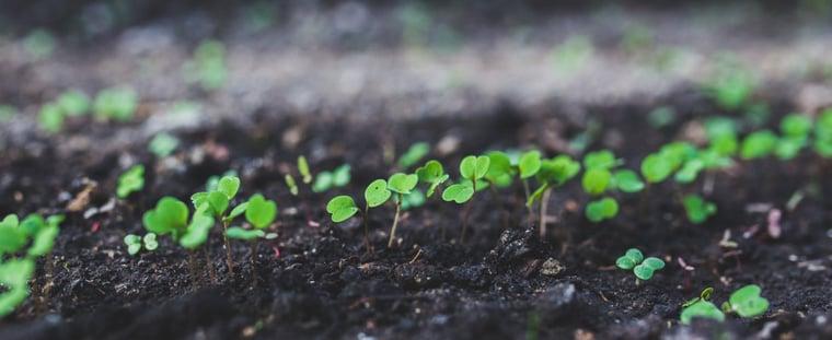 lead-nurturing-strategies