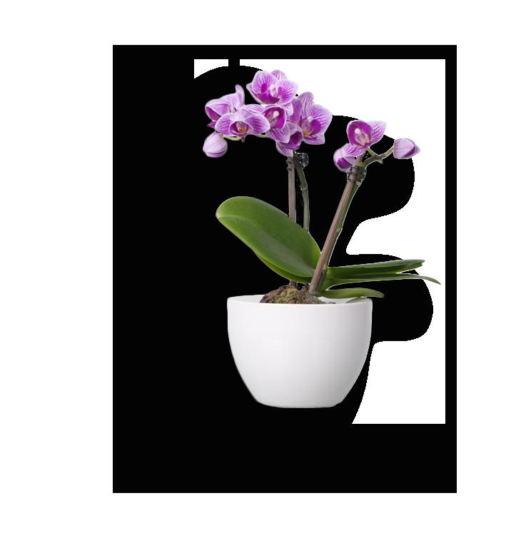 plant-img