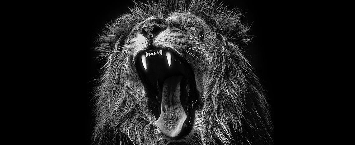 https://www.kunocreative.com/hubfs/Lion-Voice-Tone.jpg