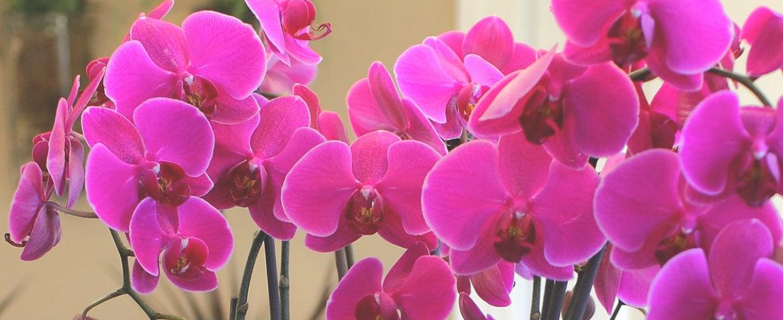 http://cdn2.hubspot.net/hubfs/32387/just-add-ice-orchids.jpg